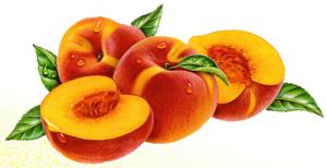 بادی اسپلش هلو (peach) آموس وان