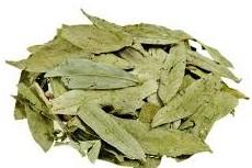 خواص درمانی قیمت و خرید اینترنتی عرق ( شربت ) مخلوط گیاهی چای سبز ، دار فلفل زوریک